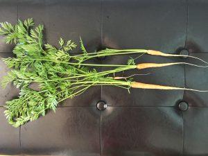 Pesto på morotsblast (Paleo)